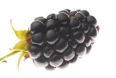 Black berry. Macro of wild black berry Royalty Free Stock Image