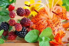 Black berry and lily Royalty Free Stock Photography