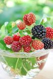 Black berry Stock Images