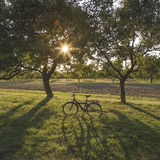 Black Bicycle Between Tall Trees Stock Photography