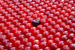 Black big cherry among small red cherries Stock Photo