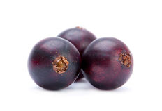 Black big currant Stock Image