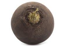 Black big radish. Vegetable closeup isolated on white Stock Photos