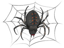 Black big scary spider sitting center of web. Poison spider Royalty Free Stock Photography