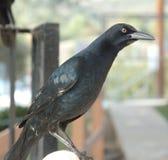 Black bird. On railing stock photos
