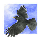Black bird - alpine chough. A black bird flying in the sky - Artwork made with watercolours stock illustration