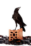 Black bird on a brick fragment in a heap of a film. On a white background Stock Photos