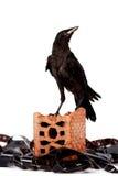 Black bird on a brick fragment in a heap of a film Stock Photos