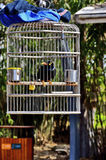 Black bird in cage Royalty Free Stock Photos