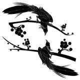 Black bird. Cartoon black bird  on white background Stock Photo