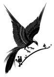 Black bird. Cartoon black bird  on white background Royalty Free Stock Images