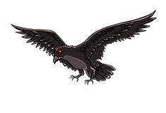 Black bird - crow Stock Photos