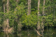 Black bird in Everglades National Park stock image