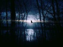 Black Bird Flying over Body of Water Stock Image