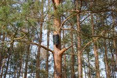 Black bird house on a pine tree stock images