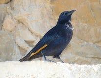 Bird on Masada fortress, Dead sea, Israel royalty free stock photos