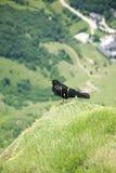 Black bird over Fuente De Stock Photo