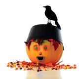 Black Bird Perch Stock Photos