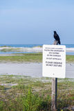 Black bird perched on protected shorebirds sign. Sign post warning to keep away from protected shorebirds on Fort de Soto county park beach in Florida Royalty Free Stock Image