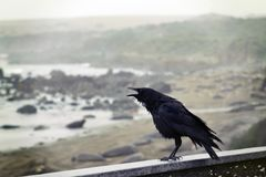 Black Bird Perching on Concrete Wall With Ocean Overview Stock Images