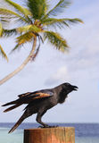 A black bird, sea and palm Royalty Free Stock Photography