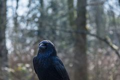 Black Bird Surrounded by Trees during Daytime Stock Photo