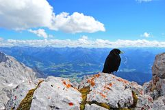 Black bird on top of the world, beauty of nature, blue alpine landscape, blue sky, snow covered mountain peaks stock images