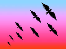 Black birds. Illustration with evening sky Stock Image