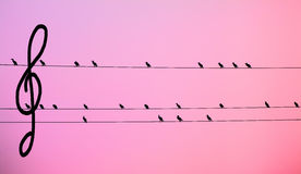 Black birds armony with bass key pemthagram. Black birds forming a melody on a pink pemthagram with a bass key Royalty Free Stock Photo