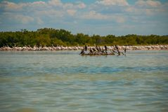 Black birds on a broken tree in the water and white pelicans in dalike. Rio Lagartos, Mexico. Yucatan. Black birds on a broken tree in the water and white Stock Photo