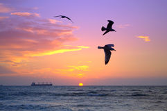 Black birds and colorful sunrise skyline Stock Photos