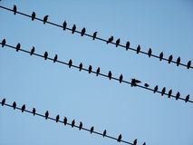 Black birds on electrical wires Royalty Free Stock Photography