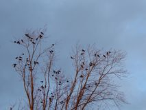 Birds in a tree with blue sky winter. royalty free stock image