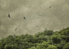 Black Birds Flying Grunge Vintage Style Photo. Digital color edited grunge vintage style photo of black birds flying in a gray cloudy sky and leafy trees at Stock Images