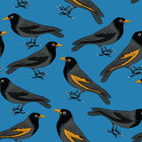 Black birds with orange beaks seamless pattern. Seamless pattern of black birds on blue background, Vector illustration Stock Photo