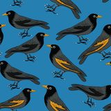 Black birds with orange beaks seamless pattern. Vector illustration on blue background. Hand drawn black birds with orange beaks. Seamless pattern. Vector stock illustration