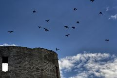 Black birds over old castle Royalty Free Stock Photography