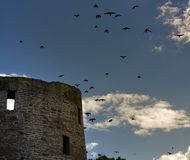 Black birds over old castle Stock Images