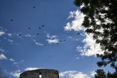 Black birds over old castle Stock Photography