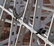 Black Birds on Scaffolding Royalty Free Stock Photo