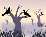 Black Birds in the Sunset. Black birds sitting in the trees at sunset in a  desolate Royalty Free Stock Image