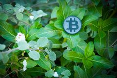 Black Bit Coin on leafs royalty free stock photos