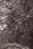 Black bituminous coal, carbon nugget background Royalty Free Stock Image