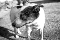 Black, Black And White, Dog, Dog Breed stock photo