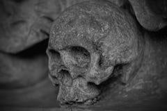 Black, Black And White, Monochrome Photography, Bone stock image