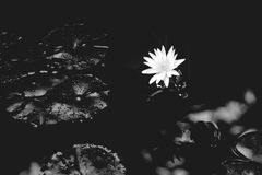 Black, Black And White, Monochrome Photography, Flora Royalty Free Stock Photo