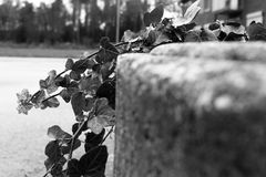 Black, Black And White, Monochrome Photography, Tree Stock Photography
