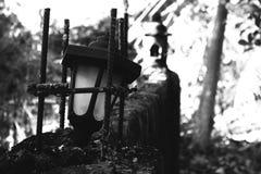 Black, Black And White, Monochrome Photography, Tree stock photo
