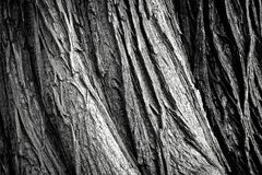 Black, Black And White, Monochrome Photography, Tree royalty free stock image