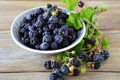 Black  blackberries in a bowl Royalty Free Stock Image